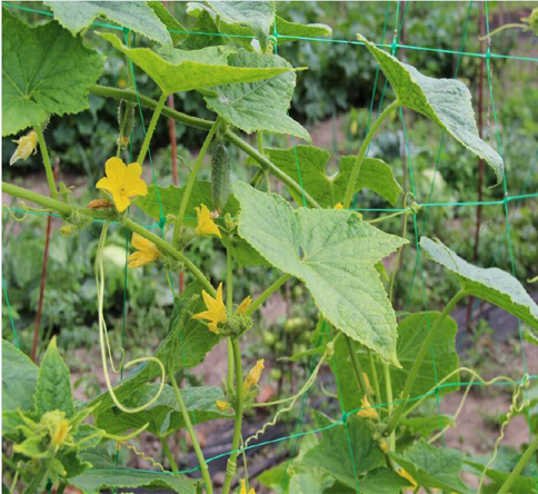 Why Should You Use Trellis Netting?